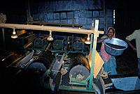 Thekkadi. Tea leaf grinding machine. Women working.