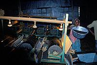 Thekkadi. Tea leaf grinding machine. Women working.
