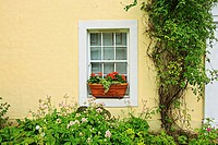Beutiful plants in front of a Scottish house
