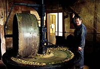 Walnut oil production. Factory worker operating a millstone press that crushes walnuts to extract their oil. Photographed in France.