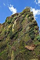 Living Wall, located at the Caixa Forum, Madrid, Spain. This installation was designed by the French botanist Patrick Blanc born 1953. He has designed...