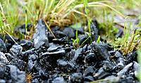 Coal on grass