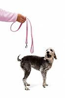 Dog training, exercise & well being
