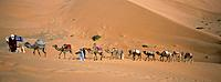 Merzouga is a small village in southeastern Morocco,about 20 kilometers from the Algerian border. The village is most famous for Erg Chebbi,a huge Sah...