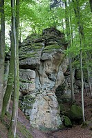 rocks and forest in German Luxembourgian Nature Park, Germany