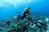 Scuba Diving at Caribbean, Netherlands Antilles, Caribbean, Bonaire