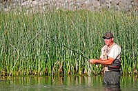 fly fishing at 1000 Springs on The Snake River near the city of Hagerman in southern Idaho