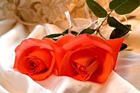 Red rose with silver ribbon