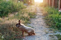 Rabbit in the countryside in Kirillovka, Togliatti, Samara Region, Russian Federation
