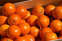 orange in the market
