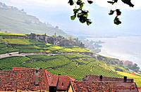 Vineyard at Lake Geneva, Saint_Saphorin, Lavaux, Canton of Vaud, Switzerland