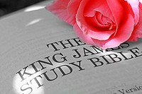 King James Bible and pink rose