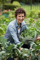 Hispanic woman gathering broccoli in garden