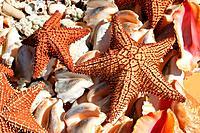 Assortment of starfish and seashells