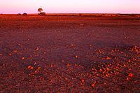 Sturt Desert, NSW, Australia