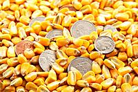 Cash Corn Crop