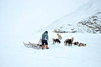 Dog sledging trip in cold snowy winter, running dogs, Kulusuk village, Greenland