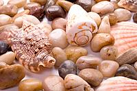 sea shells and pebble