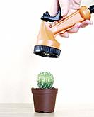 Woman's Hand Holding Sprinkler Hose Attachment and Watering Cactus