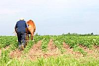 Belarus farmer