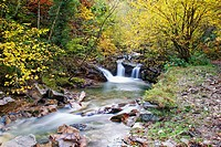 Alba River. Redes Natural Park and Biosphere Reserve. Soto de Agues. Sobrescobio Council. Asturias. Spain