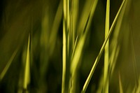 summer grass, abstract background