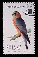 Poland _ CIRCA 1974: A stamp _ Falco Columbarius