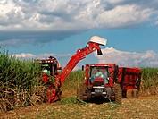Mechanized harvesting of cane_sugar, Piracicaba, São Paulo, Brazil