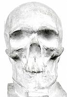 Gypsium skull
