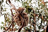 Wild life in Australia