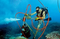 Drilling a 1 meter long core from a living porites coral colony at Fanning Island, Kiribati, Tabuaeran