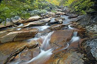 Mountain stream running through autumnal woodland, Norway, Kvikne, Sor_Trondelag, Orkdalen