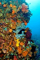 reef with a wide and colourful range of species, among them sponges and other invertebrates, Indonesia