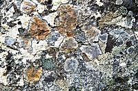 weathered stone background