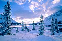 Winter landscape with spruces in a valley, Yukon, Canada