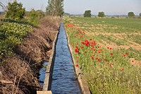 Irrigation channel with red poppies along side