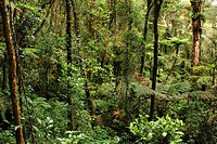 view through the tropical rain forest, Malaysia, Sabah, Kinabalu National Park, Borneo