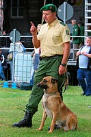 Malinois Canis lupus f. familiaris, police dog sitting on the lawn scenting at a public demonstration at the dog handler´s leash