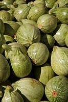 Green round squash