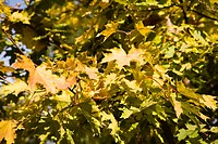 Collection of autumn leaves in tree nurseries 3