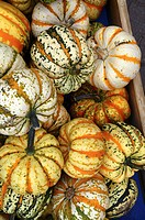 colourful pumpkins after harvest