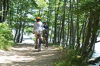 Cyclists riding through woods, rear view