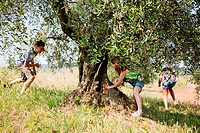 Children playing by tree (thumbnail)