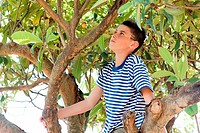 Boy climbing tree (thumbnail)