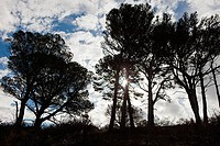 Sunlight through trees on Signal Hill, Cape Town, South Africa