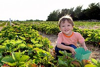 Young Boy Picking Strawberries, Uxbridge, Ontario