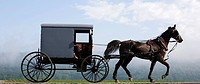Horse_drawn Buggy
