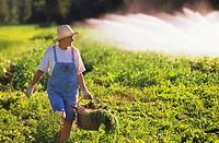 Woman gardening, Pemberton, British Columbia, Canada.
