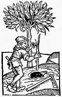 agriculture, farm labour, planting a tree, woodcut, Ruralia commoda by Pietro Crescenzi, edition of Peter Drach, Speyer, 1493, farmer, seedling, peopl...