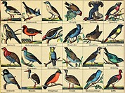zoology / animals, birds, local and exotic bird species, illustrated chart, Germany, circa 1865,